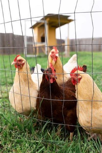 Hutto Single Family Home Pending - Taking Backups: 307 Pheasant Cv