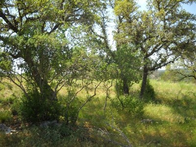 Residential Lots & Land For Sale: 507 Branding Iron