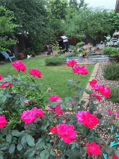 Austin Single Family Home For Sale: 9204 Rock Castle Cv