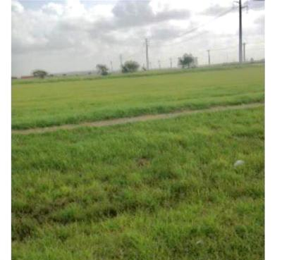 Portland Residential Lots & Land For Sale: County Rd 2004 Dr