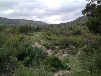 Residential Lots & Land ACTIVE: Pandale Road 185 Acres