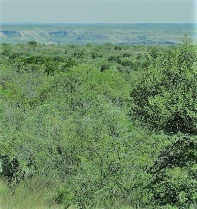 Comstock TX Residential Lots & Land ACTIVE: $46,100