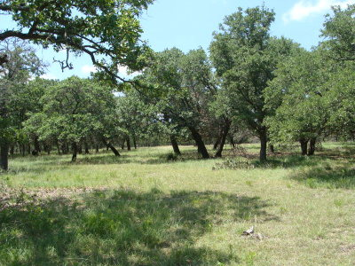 Residential Lots & Land For Sale: S Vintage Oaks Dr