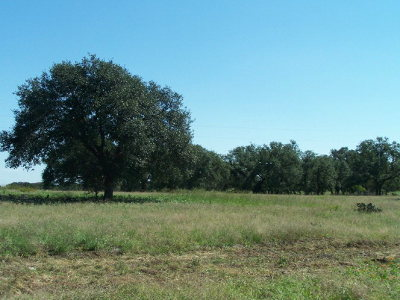 Mason County Residential Lots & Land For Sale: 3 Ischar Lane