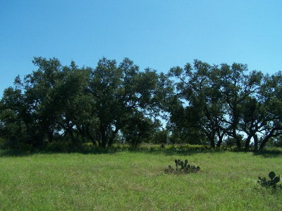 Mason County Residential Lots & Land For Sale: 12 Ischar Lane