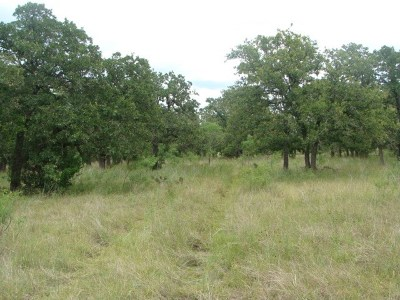 Residential Lots & Land For Sale: Big Bend Ln