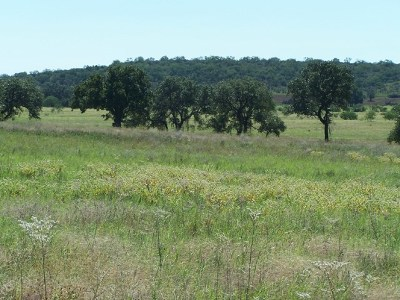 Mason County Residential Lots & Land Under Contract W/Contingencies: 4 Ischar Lane