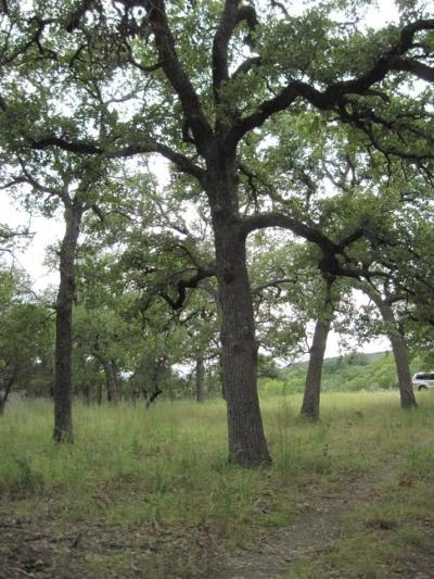 Fredericksburg TX Ranch Land For Sale: $719,000