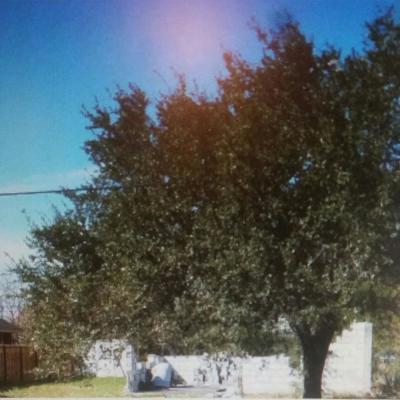 Weslaco Single Family Home For Sale: 1720 W Corpus Christi Drive