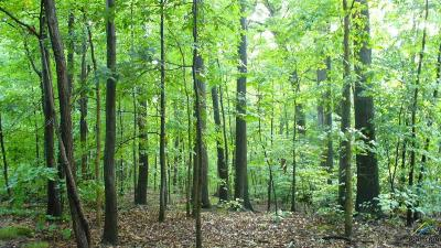 Tyler Residential Lots & Land For Sale: 3387 Bridgewood Trail