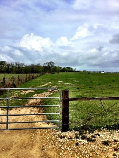 Waller County Farm & Ranch For Sale: 00 Fm 1736 Road