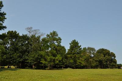 Conroe Farm & Ranch For Sale: 366 Ac White Rock Road