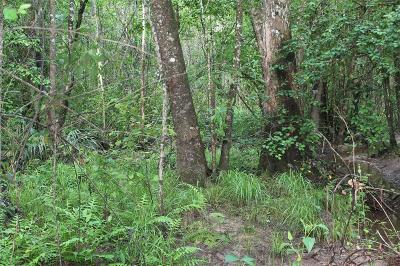 Conroe Residential Lots & Land For Sale: 22-25 Peach Creek Drive