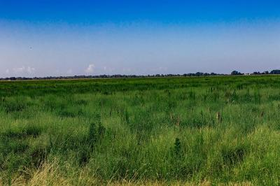 Residential Lots & Land For Sale: Fm 360 Road