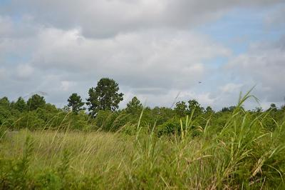 Tomball Residential Lots & Land For Sale: 1 Agg