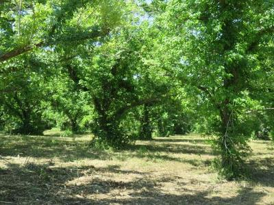 Wharton County Country Home/Acreage For Sale: 00 County Rd 267