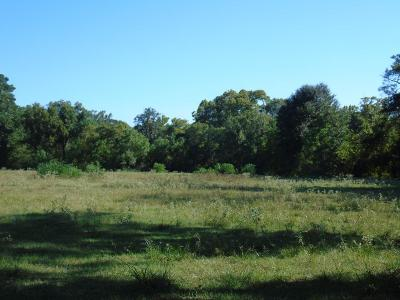 Conroe Farm & Ranch For Sale: Nicholson Road