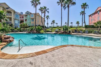 Galveston Rental For Rent: 7000 Seawall Boulevard #911