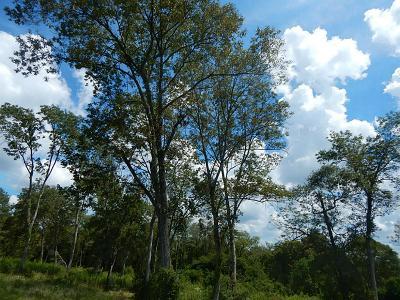 Dayton Residential Lots & Land For Sale: Fm 1008