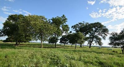 Weimar TX Farm & Ranch For Sale: $1,559,750