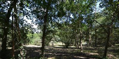 Friendswood Residential Lots & Land For Sale: 1311 Woodvine