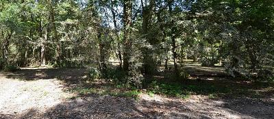 Friendswood Residential Lots & Land For Sale: 1309 Woodvine
