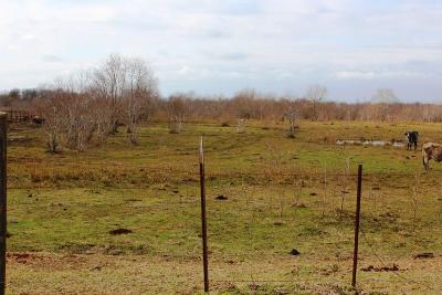 Dayton Residential Lots & Land For Sale: 1250 County Road 491