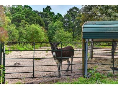 Conroe Farm & Ranch For Sale: 11041 Darby Loop