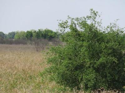 Wharton County Country Home/Acreage For Sale: 0000 Fm 1300