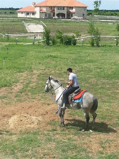 Fort Bend County Farm & Ranch For Sale: 848 Juliff Manvel