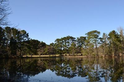 Montgomery Farm & Ranch For Sale: Apache