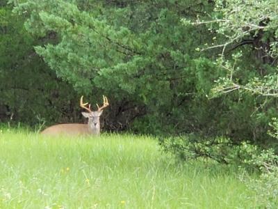 Lavaca County Farm & Ranch For Sale: County Road 125
