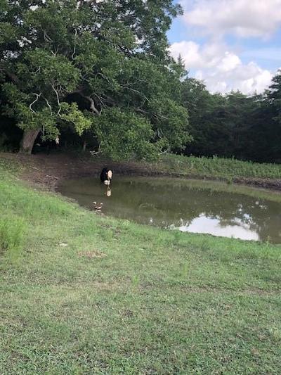 Lavaca County Farm & Ranch For Sale: Cr 210