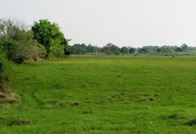 Cat Spring Farm & Ranch For Sale: 11957 Fm 1094