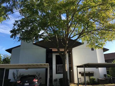 Houston Condo/Townhouse For Sale: 8020 Braesmain Drive #1607