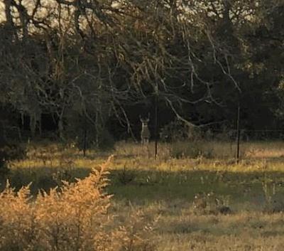 Farm & Ranch For Sale: Lola Oak Lane