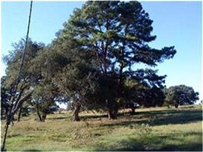 Cat Spring Farm & Ranch For Sale: Fm 949-Tract 1