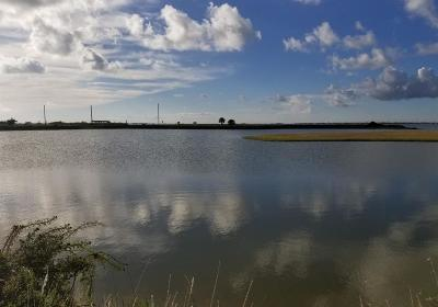 Galveston Residential Lots & Land For Sale: 10822 Egret's Nest Street