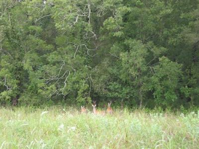 Wharton County Farm & Ranch For Sale: 17044 Cr 264