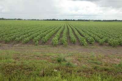 Fort Bend County Farm & Ranch For Sale: 7526 Fm 361 Road
