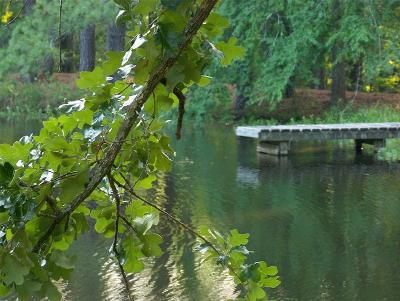 San Jacinto County Single Family Home For Sale: 2491 Fm 946