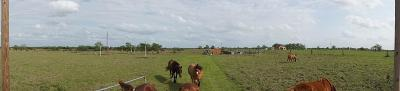 Austin County Farm & Ranch For Sale: 7230 Carriage Road