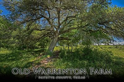 Fayette County Farm & Ranch For Sale: Fm 954 & Fm 389