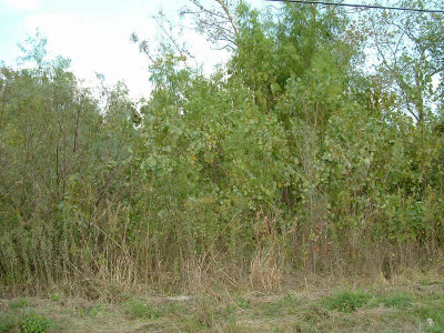 Humble Residential Lots & Land For Sale: N Greens