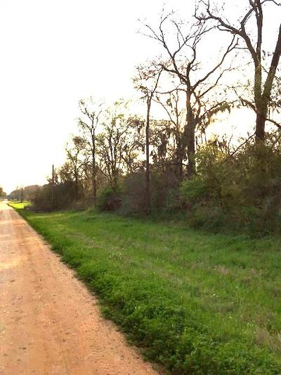 Austin County Country Home/Acreage For Sale: River Road