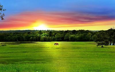 Willis Farm & Ranch For Sale: 15900 Fm 1097 Road