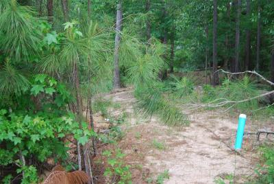 Willis Residential Lots & Land For Sale: Weeping Bow