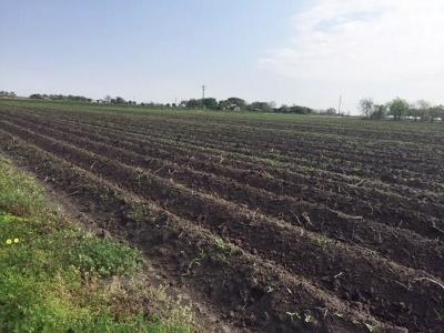 Wharton County Farm & Ranch For Sale: 00 County Rd 385