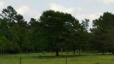 Tomball Farm & Ranch For Sale: 1515 S Persimmon Street