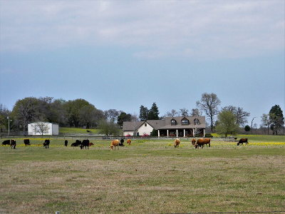 Athens Acreage For Sale: 2151 County Road 3821